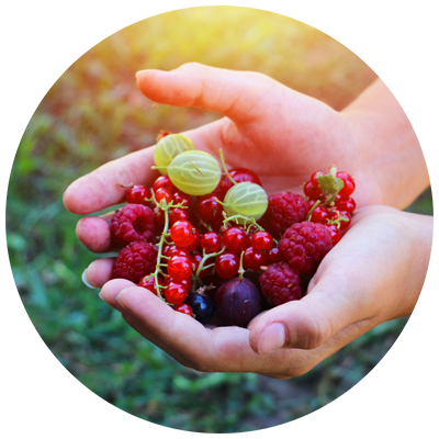 handje fruit